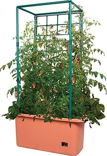 hydrofarm gctr tomaten garten auf r dern mit spalier. Black Bedroom Furniture Sets. Home Design Ideas