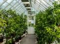 Gewächshaus Bewässerung – So geht´s